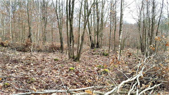 Coppicing and Sustainability
